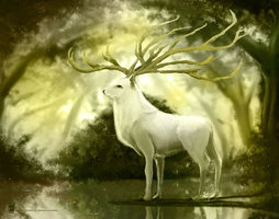 white_deer_by_psdeluxe-d5nhex7.jpg